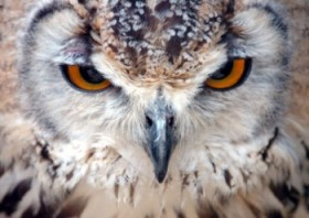 Falconry Centre, Warmington