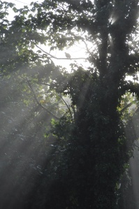 Trees in a conservation area